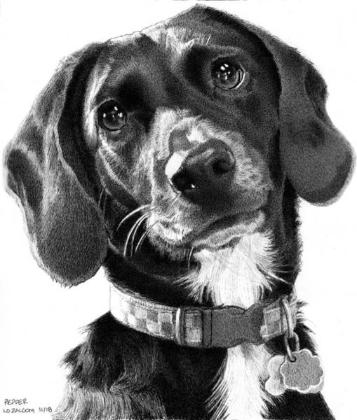 Mutt Drawing - Pepper by Lorraine Zaloom