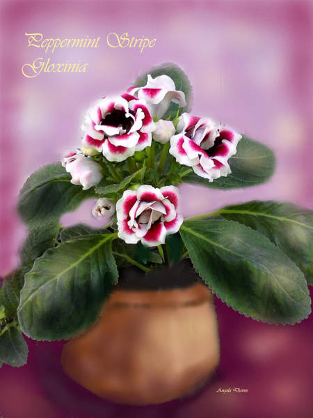 Digital Art - Peppermint Stripe Gloxinia by Angela Davies