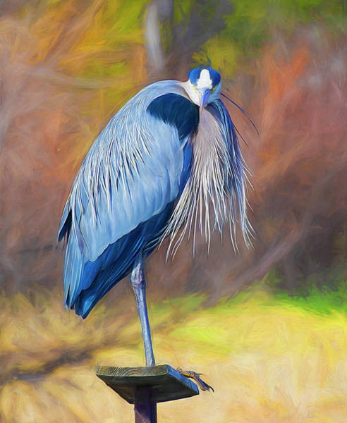 Great Blue Heron Mixed Media - Perched Great Blue Heron by Lowell Monke