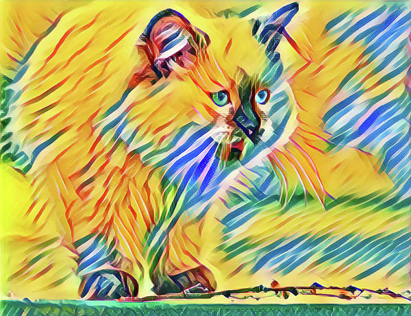 Digital Art - Perched Kitten by Don Northup
