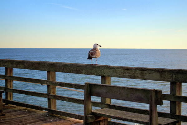 Photograph - Perched On The Pier by Cynthia Guinn