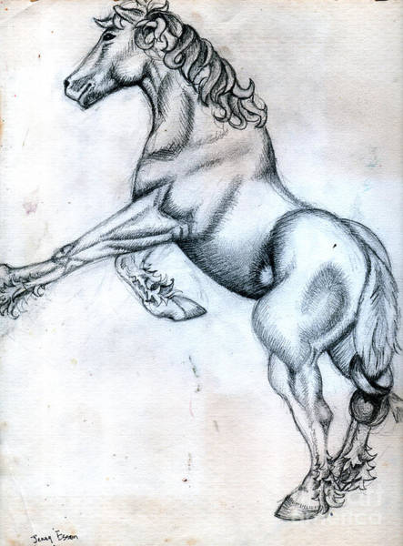 Wall Art - Drawing - Percheron Horse Sketch After Albrecht Durer by Genevieve Esson