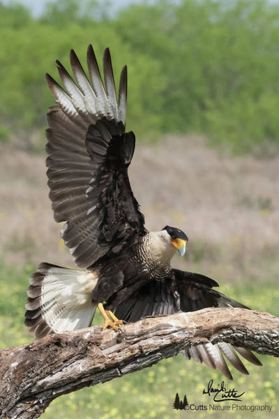 Photograph - Perfect Landing by David Cutts
