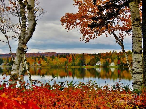 Madawaska Lake Photograph - Perfect View by Vickie Ketch