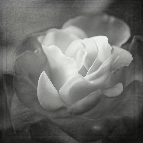Photograph - Perfectly Imperfect Monochrome By Tl Wilson Photography by Teresa Wilson