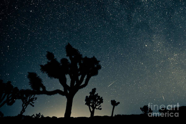 National Wall Art - Photograph - Perseid Meteor Shower by Kesterhu