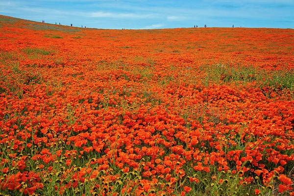 Photograph - Perspective - Superbloom 2019 by Lynn Bauer