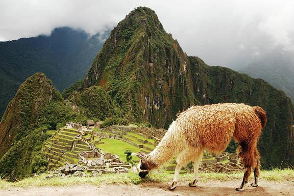 Grazing Photograph - Peru, Machu Pichu by Tristan Brown