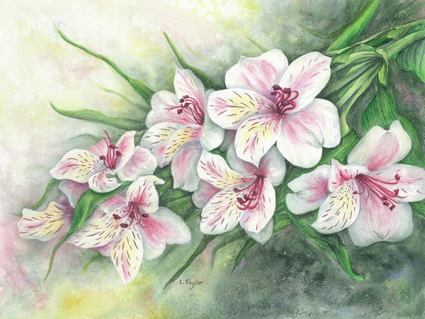 Painting - Peruvian Lilies by Lori Taylor