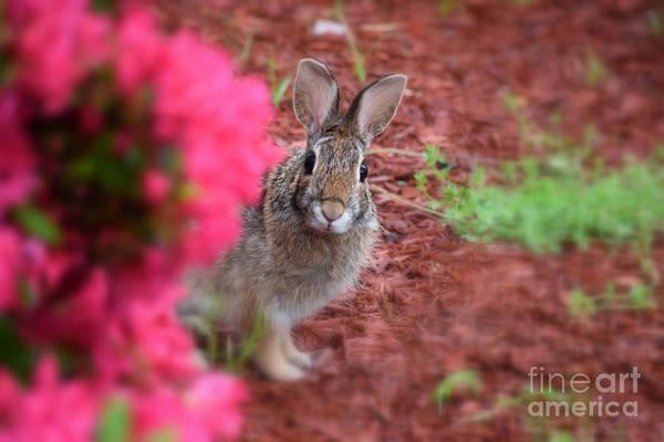 Photograph - Peter Rabbit Three by Patti Whitten