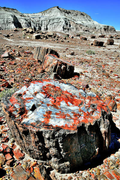 Photograph - Petrified Color In Jasper Forest by Ray Mathis