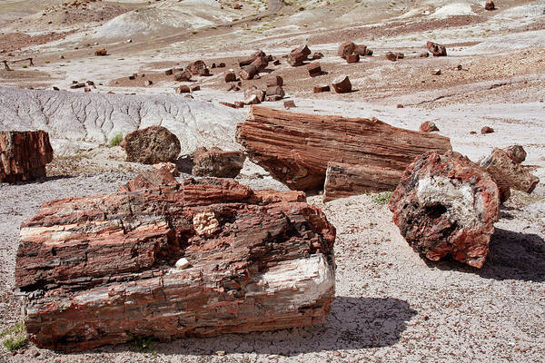 Petrified Wood Photograph - Petrified Forest by Images Etc Ltd