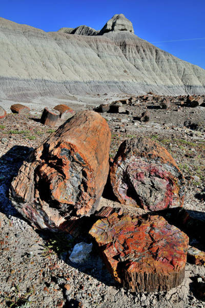Photograph - Petrified Forest National Park Logs by Ray Mathis