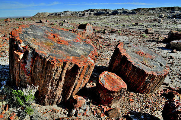 Photograph - Petrified Forest National Park by Ray Mathis