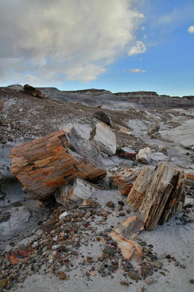 Photograph - Petrified Forest Np In Arizona by Ray Mathis