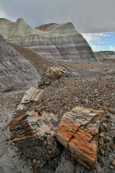 Photograph - Petrified Forest's Blue Mesa Trail by Ray Mathis