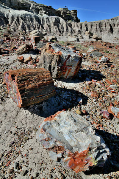 Photograph - Petrified Garden In Jasper Forest by Ray Mathis