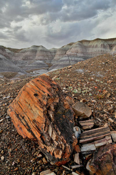 Photograph - Petrified Log In Blue Mesa Wash by Ray Mathis