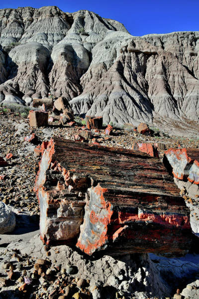 Photograph - Petrified Log In Jasper Forest by Ray Mathis