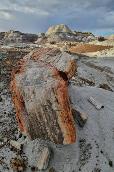 Photograph - Petrified Logs In Blue Mesa Basin by Ray Mathis