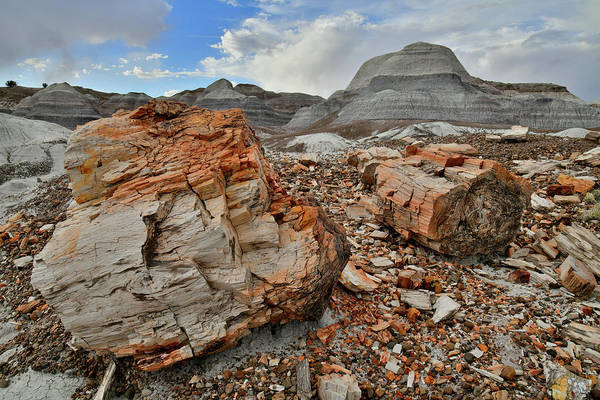 Photograph - Petrified Logs In Blue Mesa by Ray Mathis