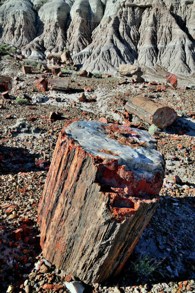 Photograph - Petrified Stump In Jasper Forest by Ray Mathis