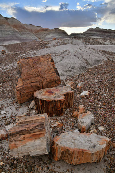 Photograph - Petrified Wood Chunks In Blue Mesa by Ray Mathis