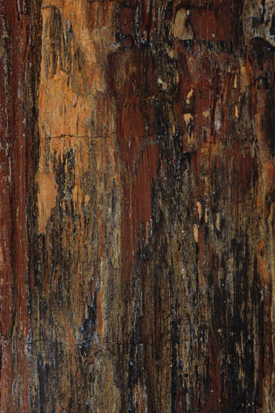 Vertical Abstract Photograph - Petrified Wood by David Wasserman