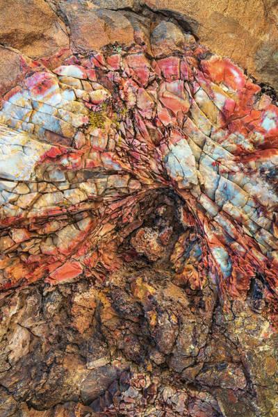 Photograph - Petrified Wood Detail by Alexander Kunz