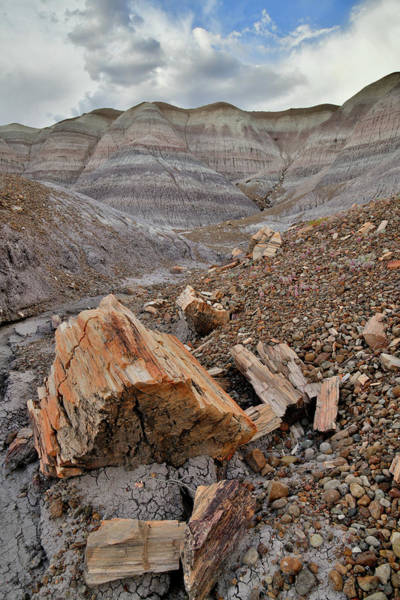 Photograph - Petrified Wood In Blue Mesa Wash by Ray Mathis
