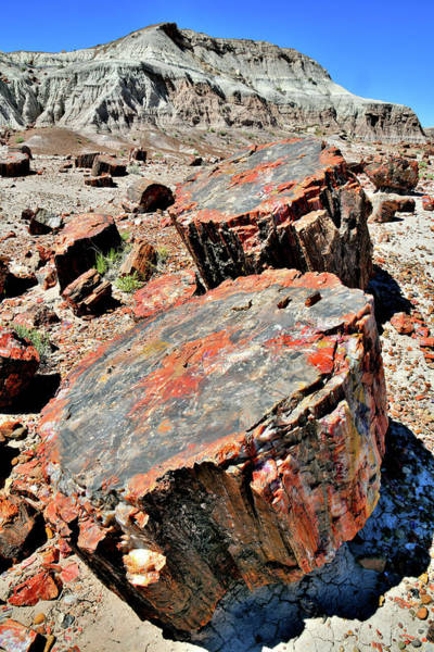 Photograph - Petrified Wood In Jasper Forest by Ray Mathis