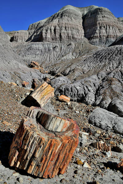Photograph - Petrified Wood Stump In Blue Mesa Basin by Ray Mathis