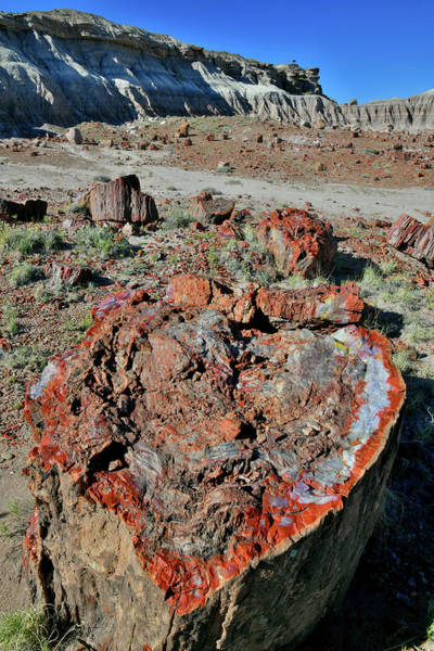 Photograph - Petrified Wood Valentine In Jasper Forest by Ray Mathis