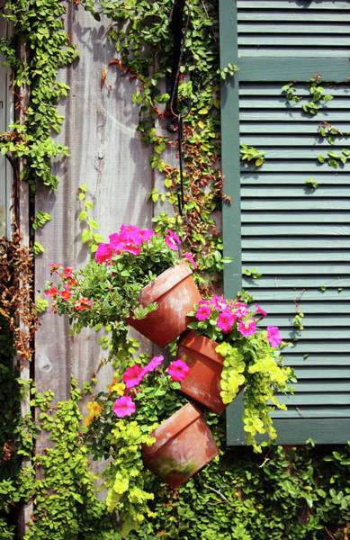 Photograph - Petunia Flower Pots by Cynthia Guinn
