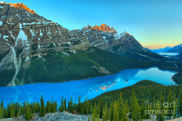 Photograph - Peyto Lake Red Tip Reflections by Adam Jewell