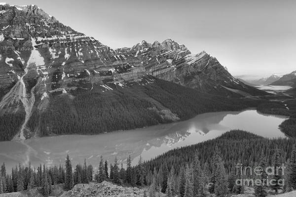 Photograph - Peyto Lake Red Tip Reflections Black And White by Adam Jewell