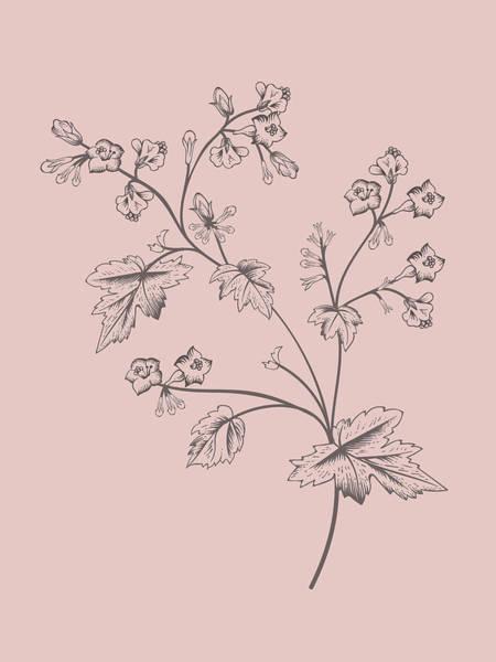 Bouquet Mixed Media - Phacelia Blush Pink Flower by Naxart Studio