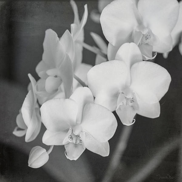 Photograph - Phalaenopsis Orchid Monochrome By Tl Wilson by Teresa Wilson