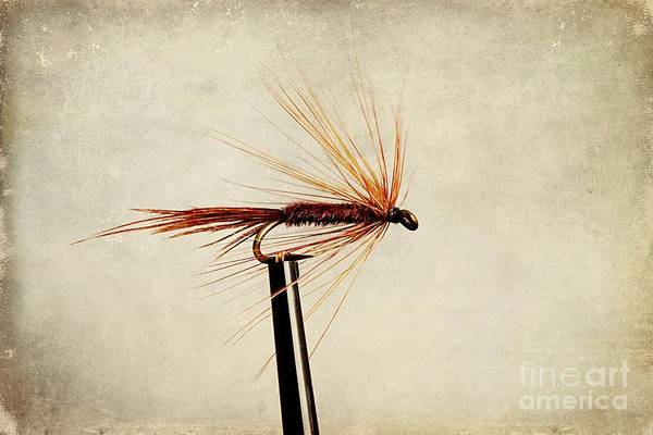 Fishing Line Photograph - Pheasant Tail Dry Fly by John Edwards