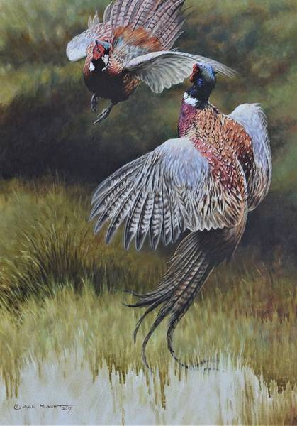 Painting - Pheasants Fighting by Alan M Hunt