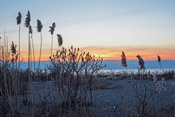 Photograph - Phillips Beach Reeds Sunrise Swampscott Ma by Toby McGuire