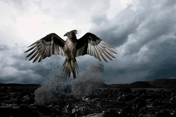 Mythical Photograph - Phoenix Rising From Ashesdigital by James Porto
