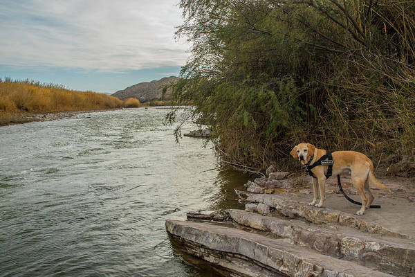 Photograph - Photo Dog Jackson At The Rio Grande by Matthew Irvin