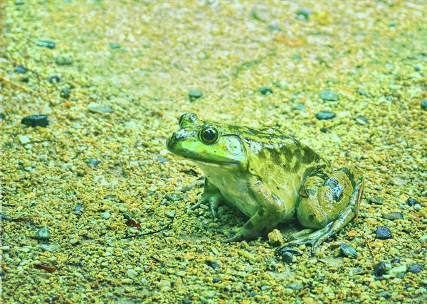 Photograph - Photo-frog by Jamart Photography