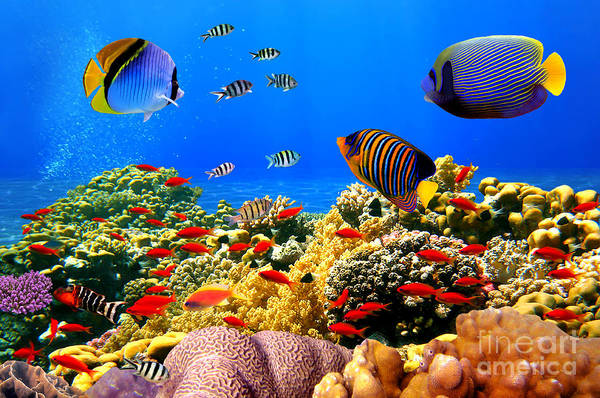 Wall Art - Photograph - Photo Of A Coral Colony On A Reef, Egypt by Vlad61