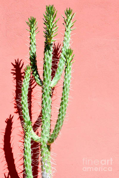Needles Wall Art - Photograph - Photo Picture Of A Tropical Cactus by Underworld