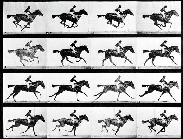 Photograph - Photographer Eadweard Muybridges Study by Eadweard Muybridge