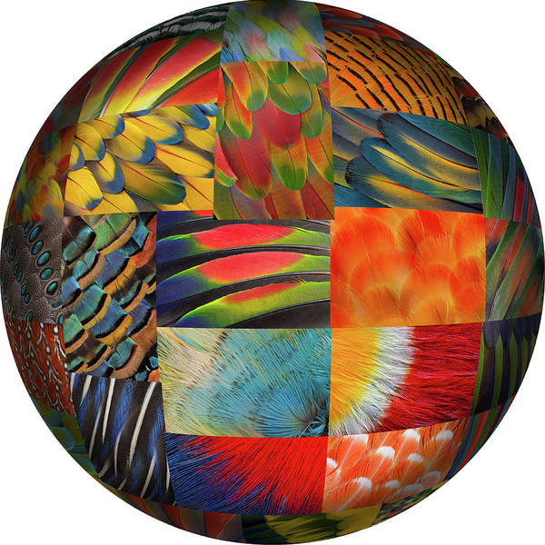 Wall Art - Photograph - Photoshop Designed Globe With Feather by Darrell Gulin
