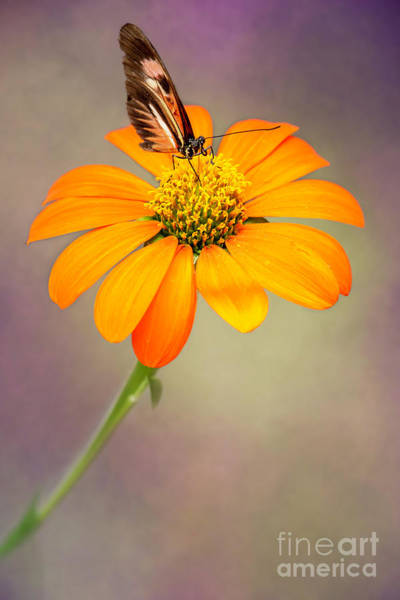 Wall Art - Photograph - Piano Key Butterfly Taking A Drink by Sabrina L Ryan