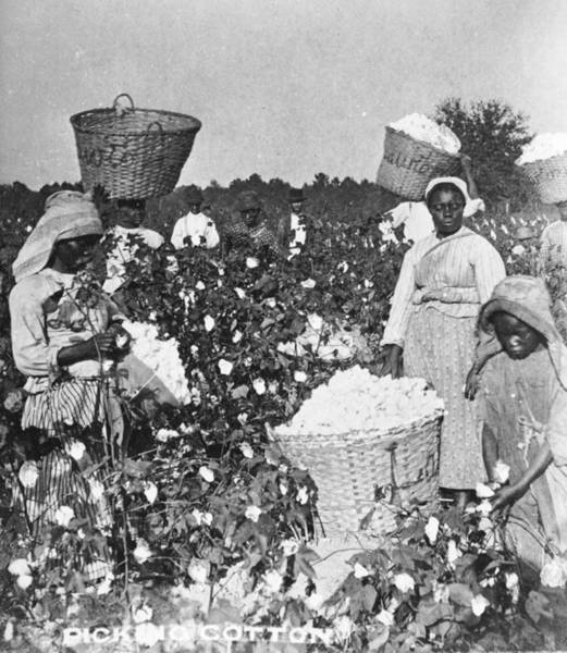 Farm Photograph - Pickers Picking by O. Pierre Havens